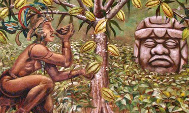 تاریخچه کاکائو