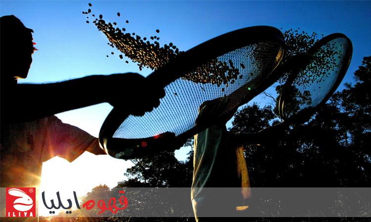 برزیل یکی از بزرگترین تولید کننده های قهوه جهان