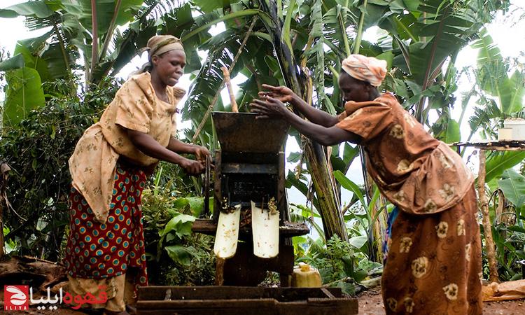 تجارت عادلانه قهوه ( Fair trade coffee )