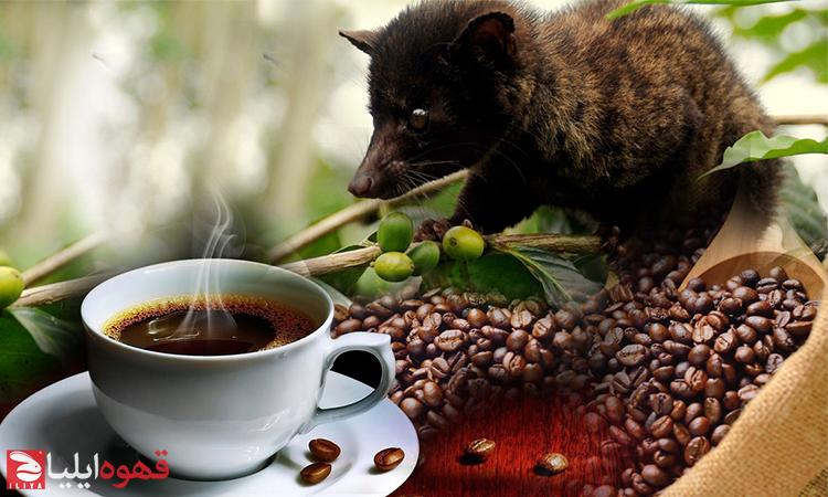 10 حقیقت عجیب در مورد قهوه که شاید ندانید !!