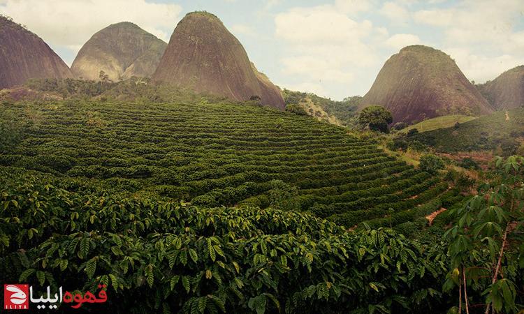 فرهنگ قهوه برزیل و فراز و نشیب آن