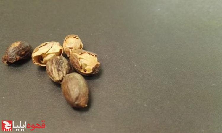 هفت نقص دانه سبز قهوه مهم برای روسترها و تولیدکنندگان