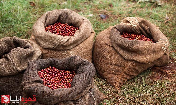 کشورهای تولید کنندهی قهوه ( آفریقا )
